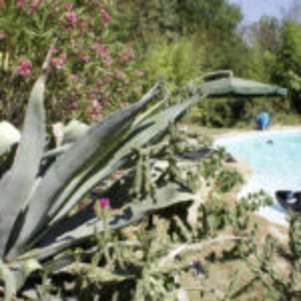 2_garden_pool06